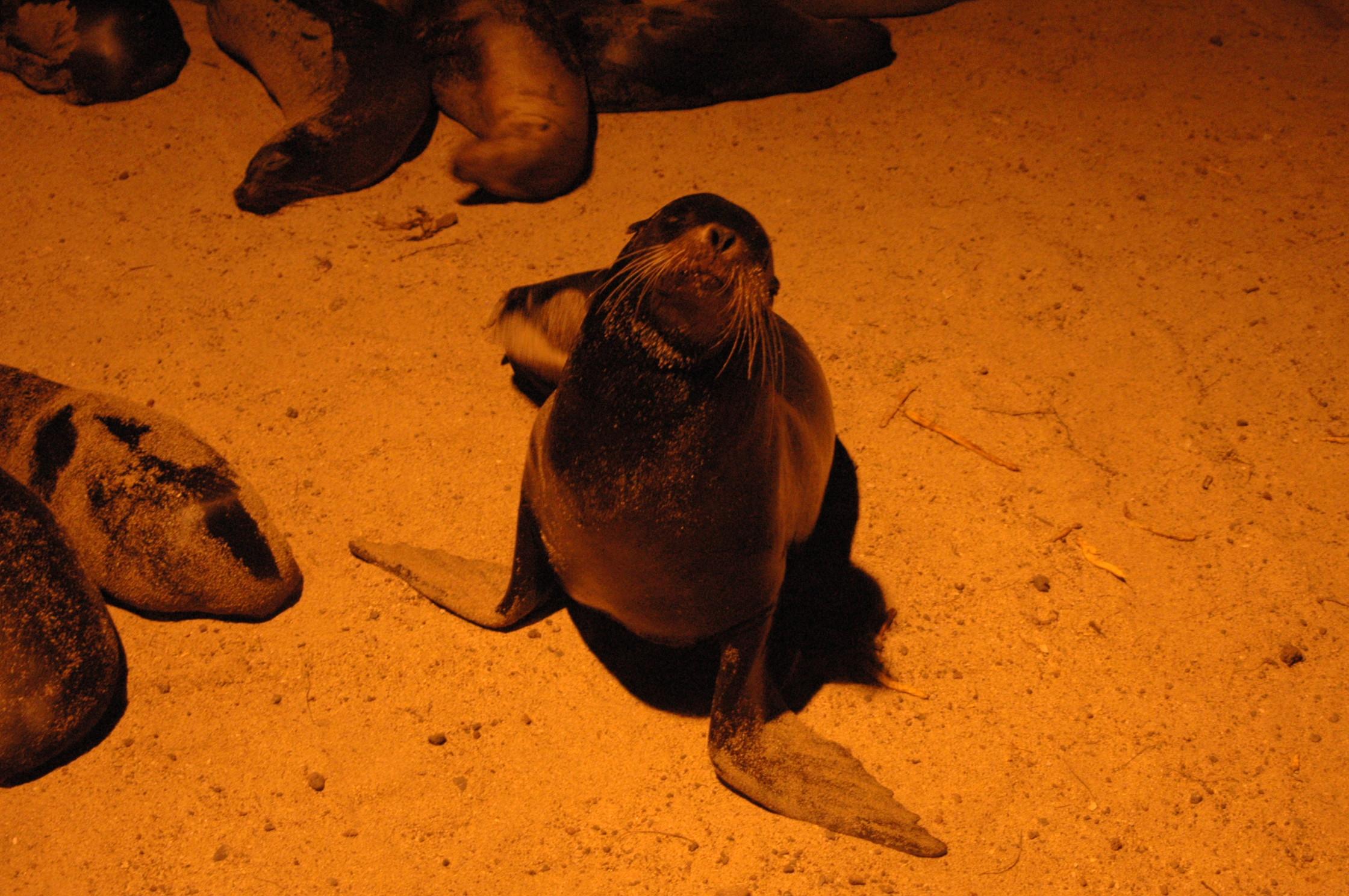 Galapagos avontuur I: De Galapagos Zeeleeuw