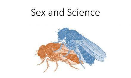 Mijn stage in 3 woorden: seks, fruitvliegjes en 3D-scans