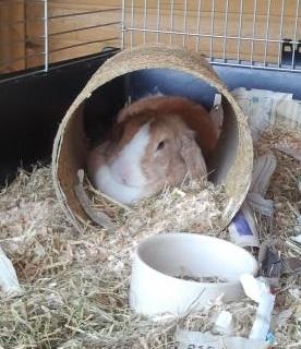 Introvert konijn
