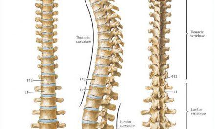 Nee zeggen of laten overhalen: over de af- of aanwezige ruggengraat