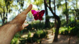 Loslaten van een vlinder