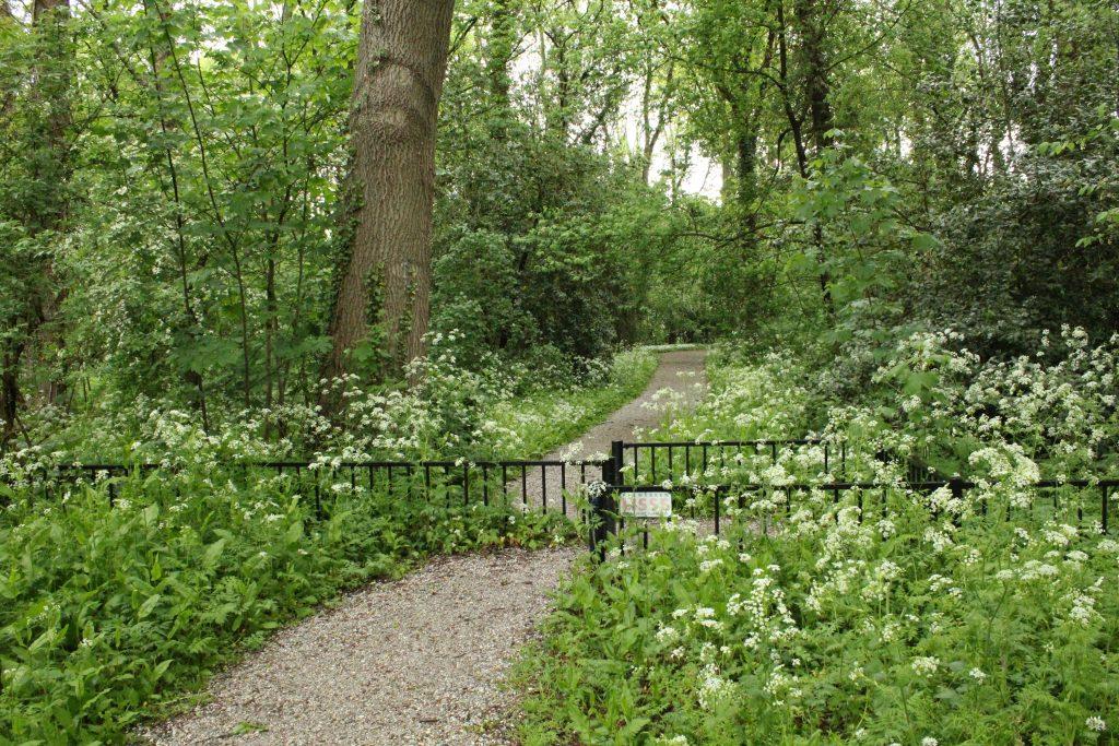 De Leidse Hout park wandelroute bos
