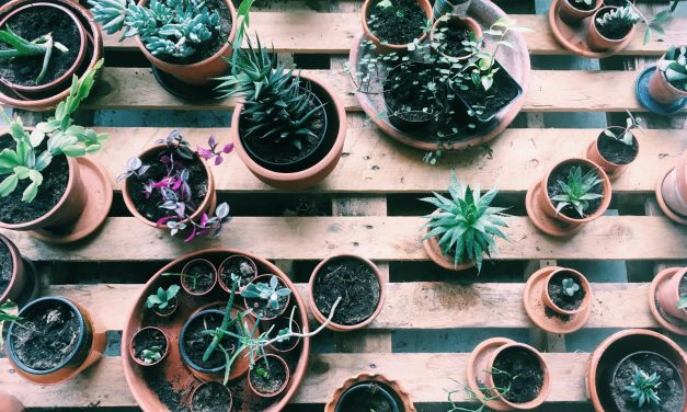 Plantenasiel Leiden: adopteer een plant voor in je studentenkamer