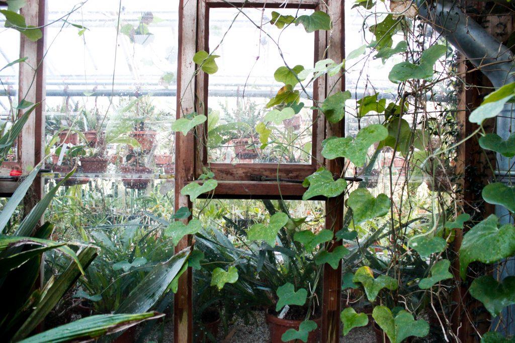 raampje en planten