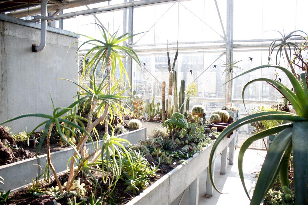 beton en vetplanten in de hortus