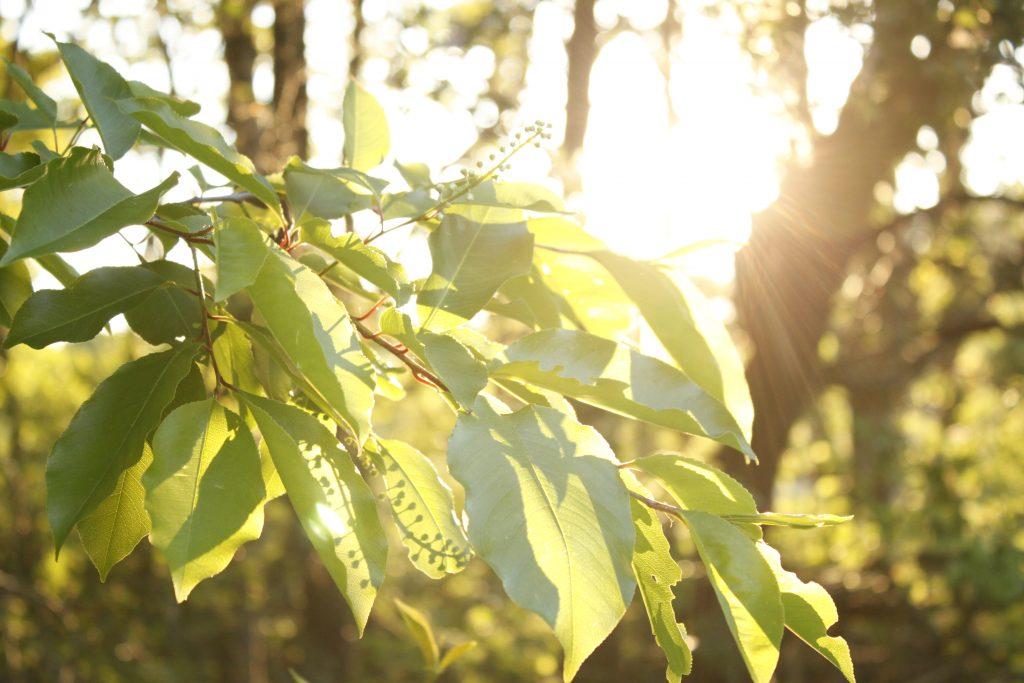 de zon en de natuur staan nooit stil