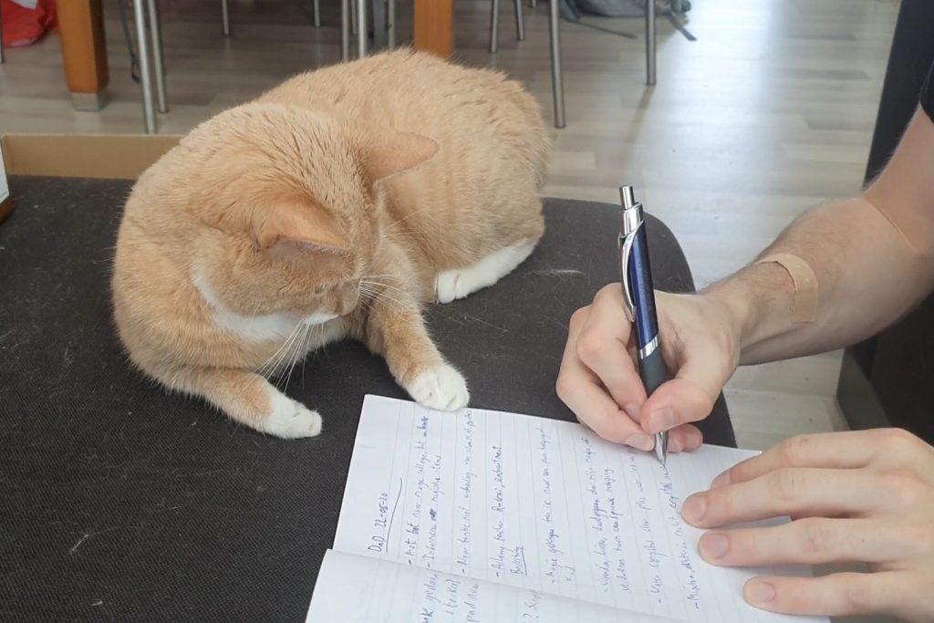 Kat helpt bij online colleges.