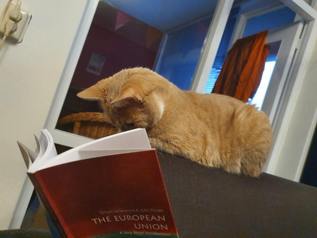 Kat studeert